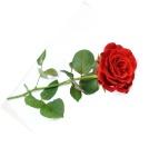 Rosa-hermosa-roja-1358588547_59